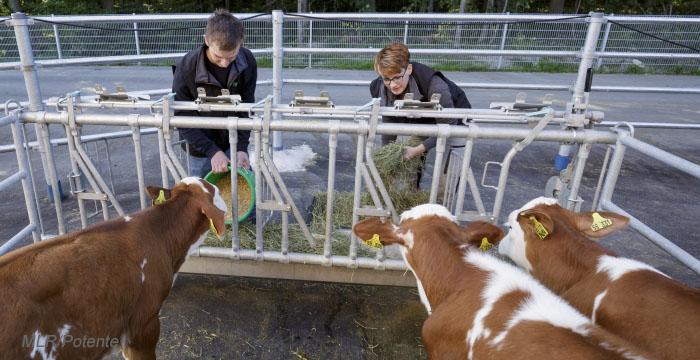 Kälber- und Rinderaufzucht