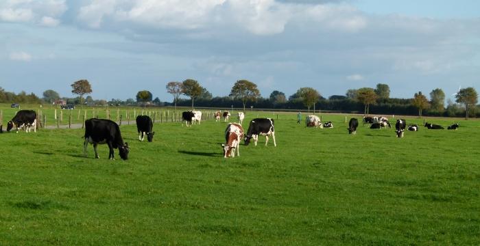 Grünlandwirtschaft und Futterbau